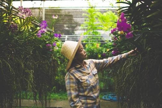 Florist tending the orchids