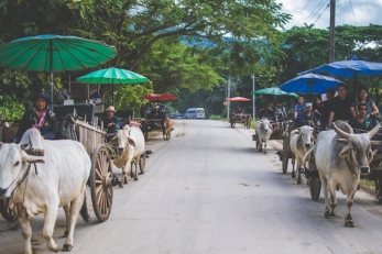 Ox carts mobilizing the tourists