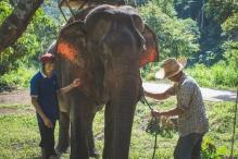 Sad elephant for hire